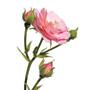 Damaskas roze